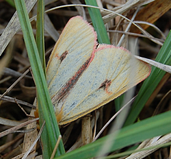 Butterfly Conservation Field Trip To Insh Marshes July 2010